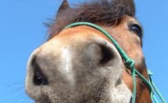 Ostbelgien - Tierärzte - Tiermedizin