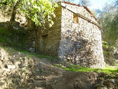 ROMANTISCHER OLIVENHAIN MIT RUSTICO  IN LIGURIEN ( Italien) - 18031 Biaiardo ( Italien), Italien