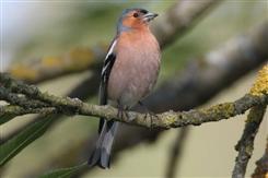 Ostbelgien - Vögel an Bach und Waldrand -Wanderung mit der AVES