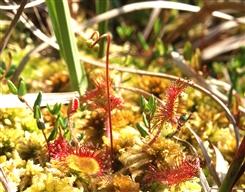 Ostbelgien - Artenvielfalt im Birkenbruchwald