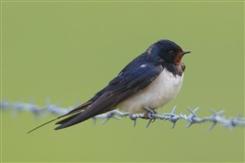 Ostbelgien - Vögel in Feld und Flur