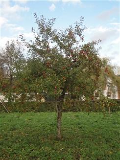 Ostbelgien - Apfel-Spendenaktion