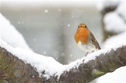 Ostbelgien - Vogelzählaktion : Wer ist denn heute zu Gast im Garten?