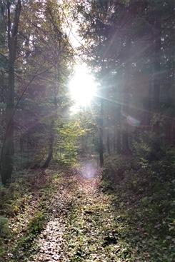 Ostbelgien - Waldtherapie