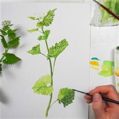 Ostbelgien - Schau genau - Pflanzenbestimmung durch Zeichnen