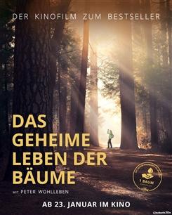 Ostbelgien - Das geheime Leben der Bäume